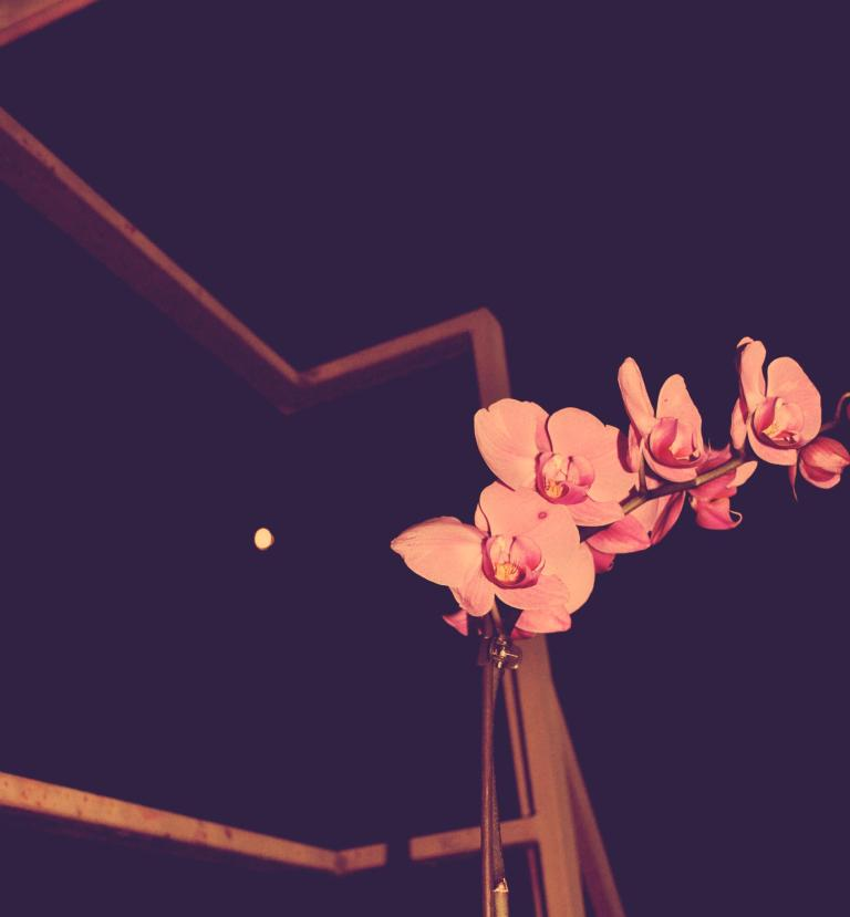 Flower in the Night